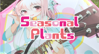 Seasonal Plants